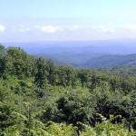 Бъдещето на издънковите гори